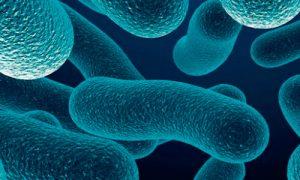 Empresa de tratamiento contra la Legionella en Mallorca