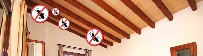 termitas en mallorca