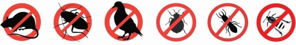 controlde plagas de insectos