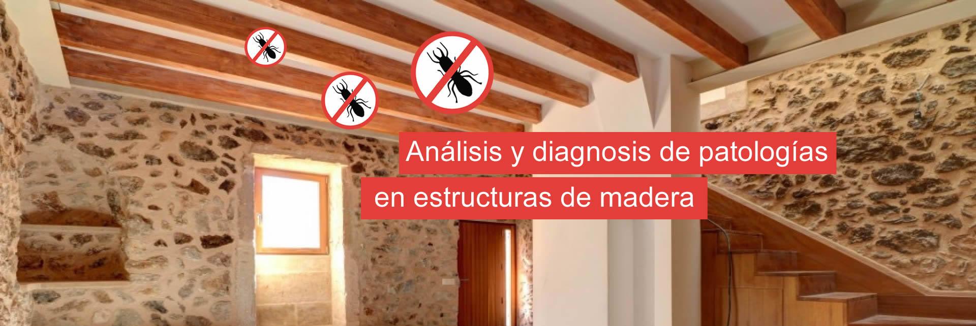 control plagas termitas